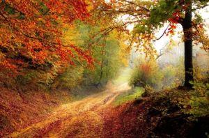 https://c.pxhere.com/photos/e7/82/road_forest_season_autumn_fall_landscape_nature_forest_landscape-839463.jpg!d