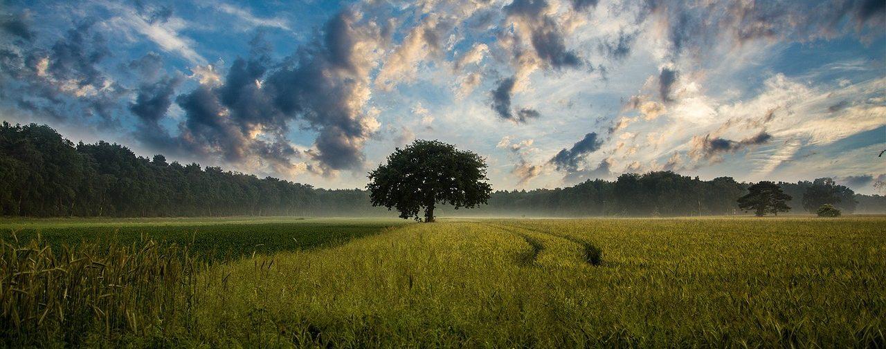 cropped-tree-247122_1280.jpg