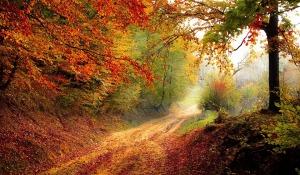 road-1072823_960_720 pixabay.com