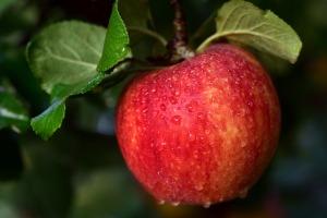 apple-3721206_1280