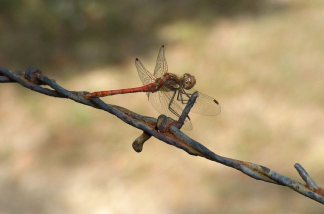dragonfly-2126264_1280